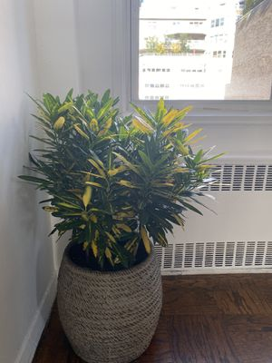 Plant for Sale in New York, NY