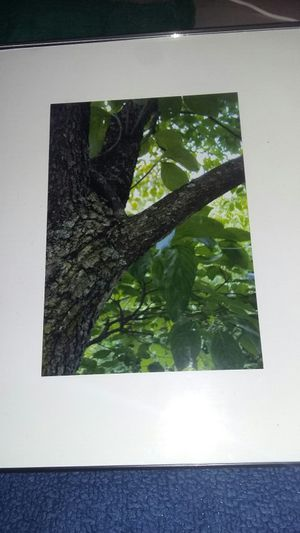 Tree picture for Sale in Pittsburgh, PA