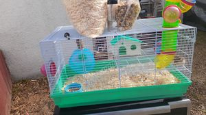 Hamsters for Sale in Paramount, CA