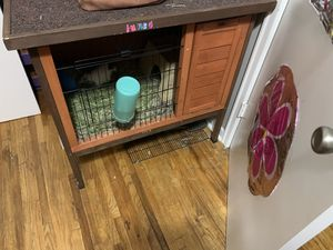 Guinea pig cage and everything for Sale in Nevada, IA