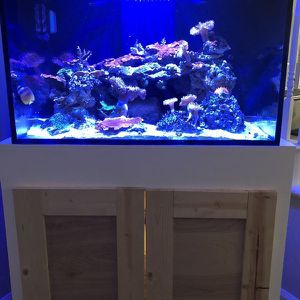 60 Gallon Cube - Rimless Reef Tank for Sale in Riverside, CA