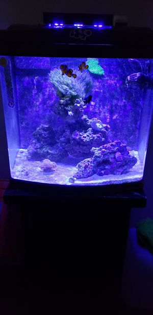Fish Tank JBJ 24g Cube for Sale in Huntington Park, CA