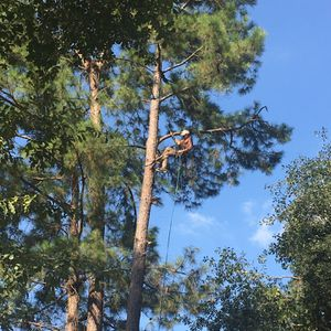 Tree Service for Sale in Spring, TX