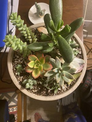 9 by 8 succulent arrangement for Sale in Denver, CO