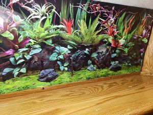 Fish tank wall art decoration 48 inch for Sale in Olympia, WA