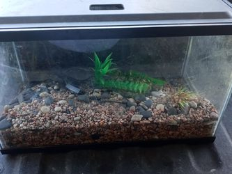 10 Gal Fishtank for Sale in Grand Prairie,  TX