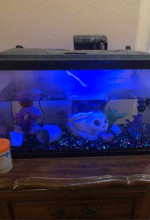 Fish tank with everything you see lights , pump , 1 big sucker fish , 15 gallons for Sale in Sacramento, CA