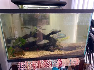 30 gallon fish tank, with assorted live plants and real drift wood for Sale in Solana Beach, CA