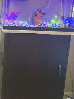 Fish Tank for Sale in Byron,  CA
