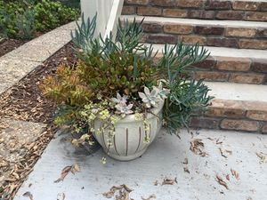 Four beautiful planters with succulents. for Sale in Irvine, CA