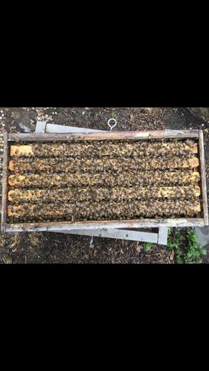 Honeybee Nucs for sale $180 5 frame deep this year queens. Ask for Toni {contact info removed} for Sale in Dunkirk, MD