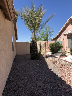$75.00 but u have to dig up and fill in dirt after removal for Sale in Payson, AZ