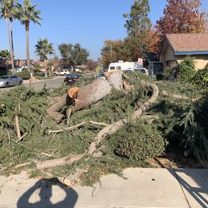 FREE Fire Wood for Sale in Fresno, CA