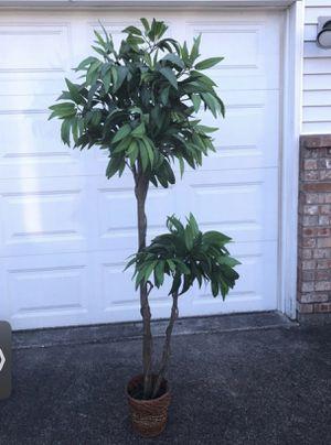 Plant for Sale in Everett, WA