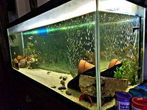 75 Gallon Aquarium FULL set for Sale in Malaga, WA