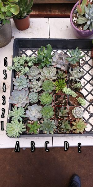 Succulents $2 each for Sale in San Marcos, CA