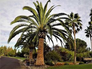 Building and hauses service gardening for Sale in Los Angeles, CA
