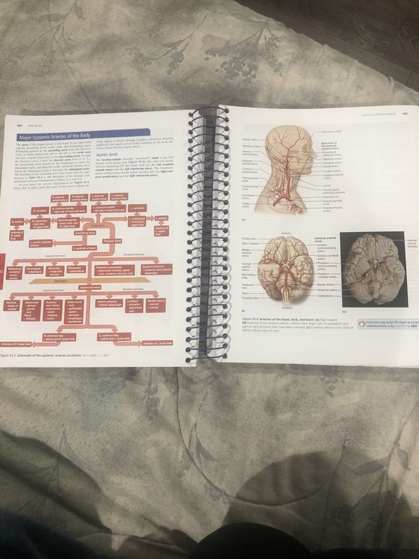 Human Anatomy College Book