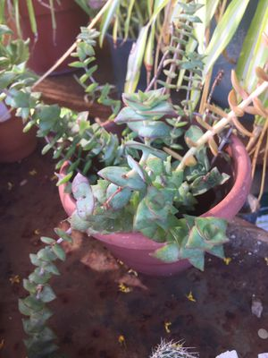 Potted plants for Sale in Azusa, CA