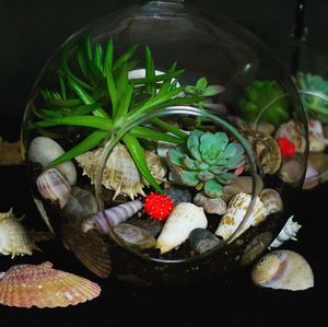 Terrarium home decor for Sale in Downey, CA