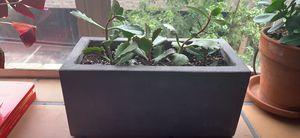 Plants for Sale! for Sale in Denver, CO