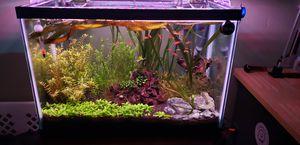 Planted 20 Gallon Aquarium for Sale in San Diego, CA