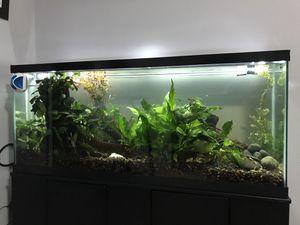 55 Gallon Live Planted Aquarium for Sale in Hialeah, FL