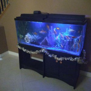70 GALLON FISH TANK INCLUDING ALL THE FISH AND DECOR for Sale in Norco, CA