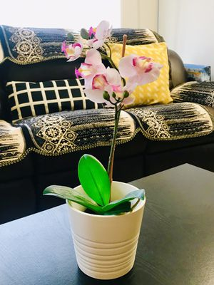 Ceramic pot with Orchid flower for Sale in Washington, DC