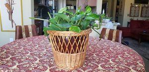 Basket Plant Holder for Sale in Aurora, CO
