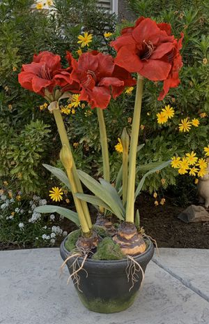 """Artificial Amaryllis - 34"""" tall for Sale in Turlock, CA"""