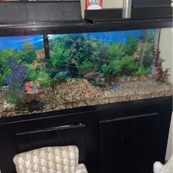 65 Galoon Fish tank for Sale in Tijuana,  MX