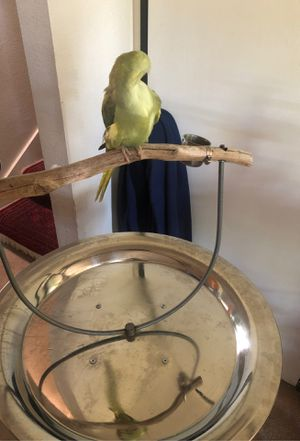 Bird Stand. **parrot** for Sale in Concord, CA
