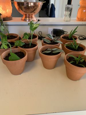 Plant Cuttings for Sale in Massapequa, NY