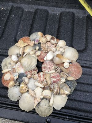 Homemade Wreath Made From Sea Shells for Sale in Allison Park, PA