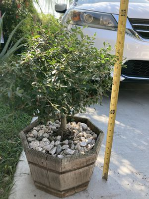 Plants for Sale in Downey, CA