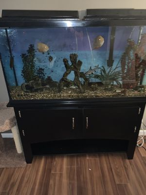 60 gallon fish tank and stand for Sale in Lynnwood, WA
