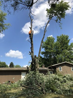 🌲🌲🌲tree🍁removal🌲trimming 🍁🍁 for Sale in Joliet, IL