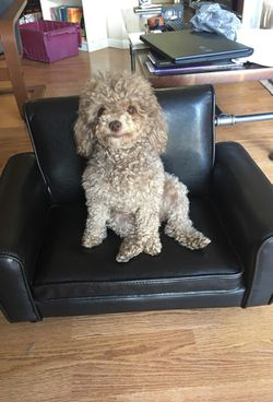 Pet furniture! Dog not included. for Sale in St. Louis,  MO