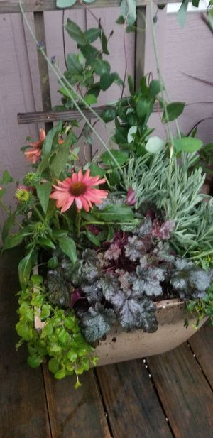 Plastic container of plants for Sale in Gresham, OR