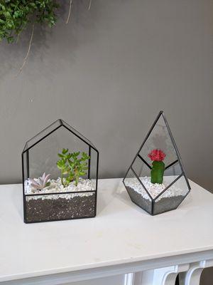 Set of live succulent arrangements for Sale in Annandale, VA