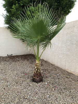Free plan tree for Sale in Glendale, AZ