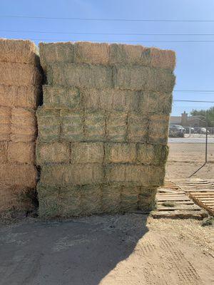 Alfalfa for Sale in Littlerock, CA