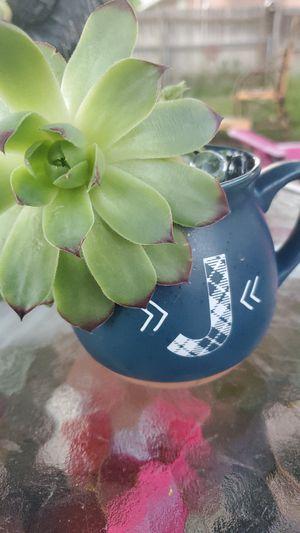 Succulent for Sale in Kearns, UT