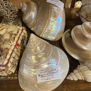 Only One Mother Of Pearl Shell for Sale in Goodyear, AZ