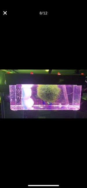 Custom Hang on Back Macro Algae and Java Moss Reactor Filter for Salt and Fresh Water Aquariums low nitrate and phosphate automatically in fish tank for Sale in Las Vegas, NV