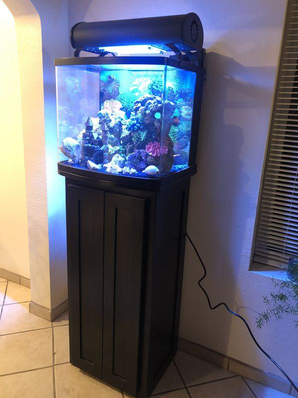 Fish tank salt water everything for $550.