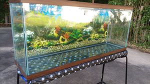 55 gallons fish tank for Sale in Bowie, MD
