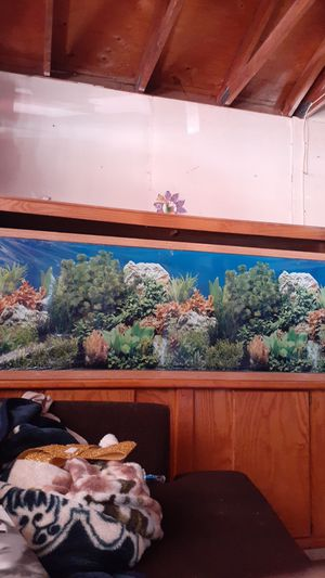 LARGE aquarium (not sure gallons 125+) for Sale in Moreno Valley, CA