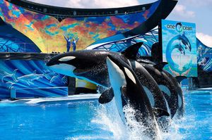 SeaWorld tickets (dining available) for Sale in Tampa, FL
